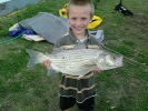 walnut river striper
